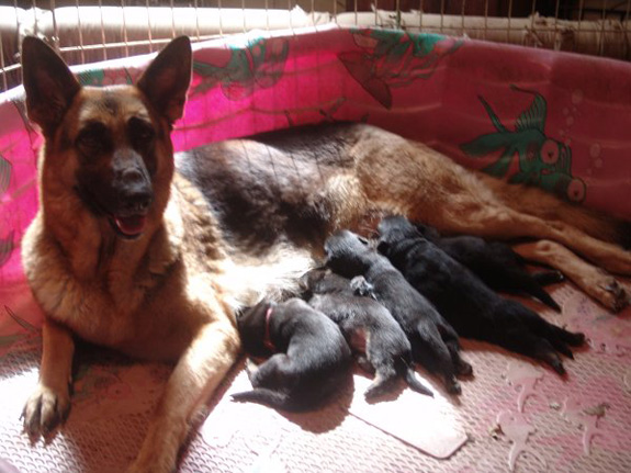 Charmin and her 5 new boys April 2012