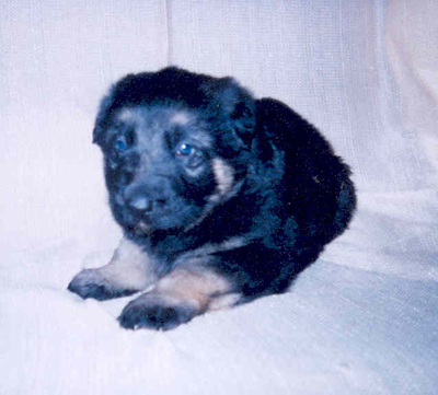 rocky as a pup