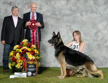 SELECT EXCELLENT GRAND CHAMPION CH MARQUIS' HORSE WITH NO NAME  OFA H/E